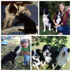 Border Collie Rescue Of Northern California Home